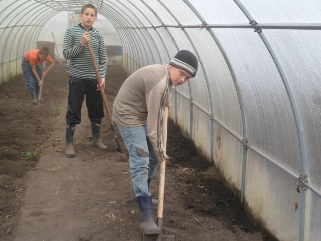 Выращивание зимой картофеля в теплице 78